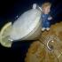 Coppa cocco Limone